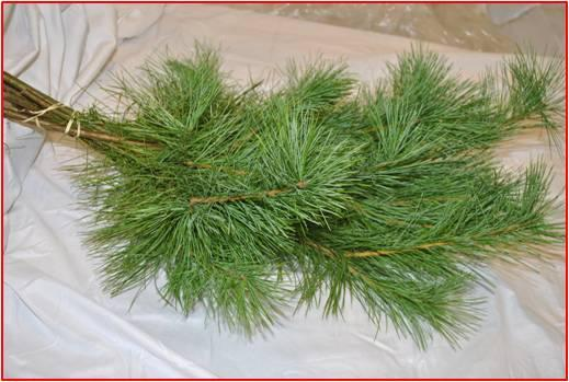 10 Stem Princess/White Pine Bunch